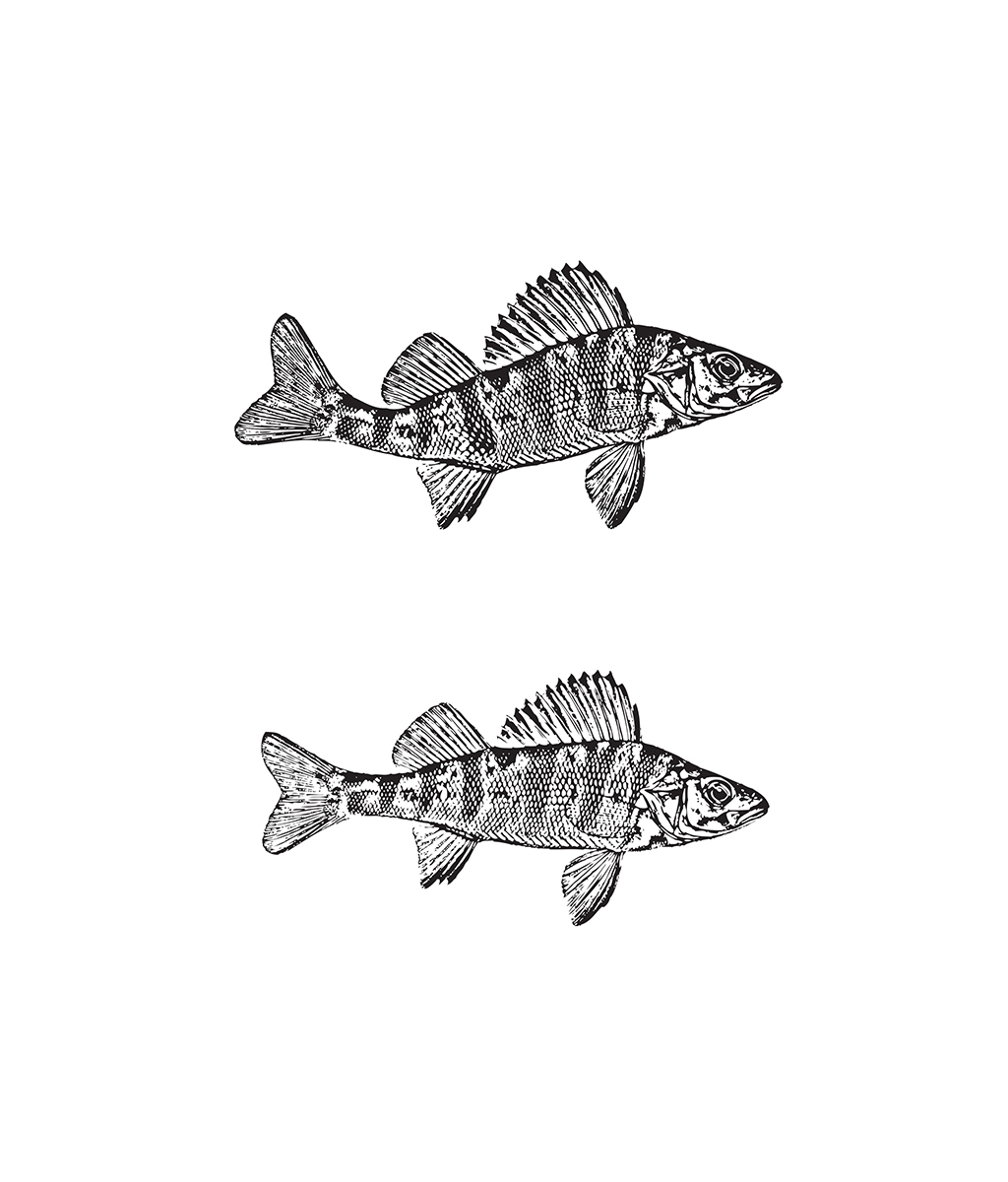 3perch-illustration