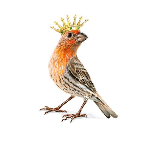 Finch King