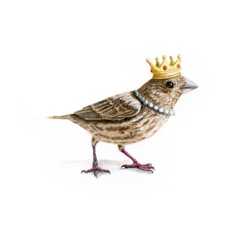 finch queen
